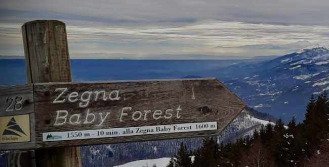 zegna forest